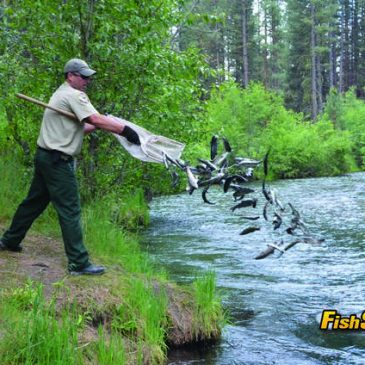 Is There A California Trout Shortage? The CDFW Comes Clean!