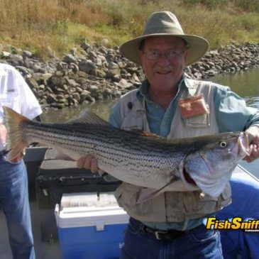 Anglers Hammer Striped Bass