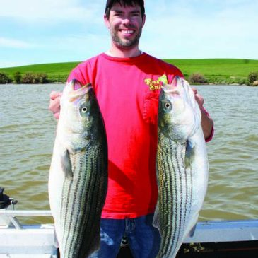 Hooking Delta Stripers In High River Flows