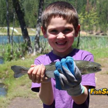 Big Trees Region Offers Big Trout Opportunities