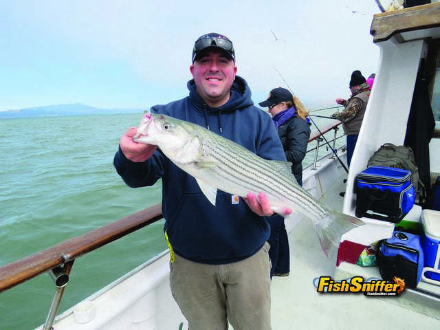 A total of 33 keeper stripers went into the fish box during the Couple's Challenge including this quality fish.
