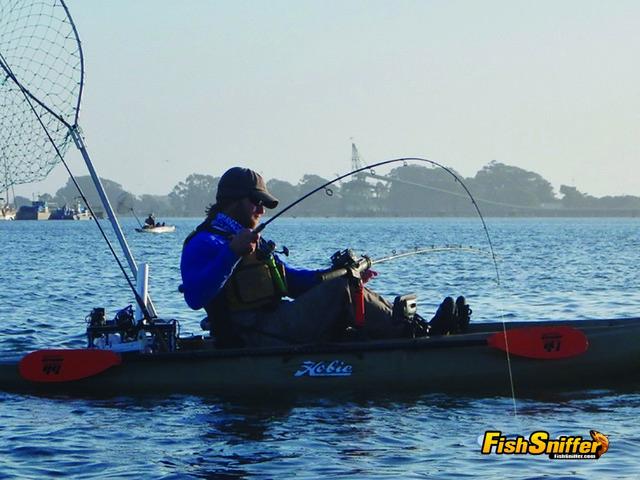 Matt Mayes had his hands full when a big bad Humboldt Bay halibut slammed his live sardine.