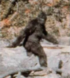 Breaking News: Bigfoot hunting is legal in Texas, but not in California!