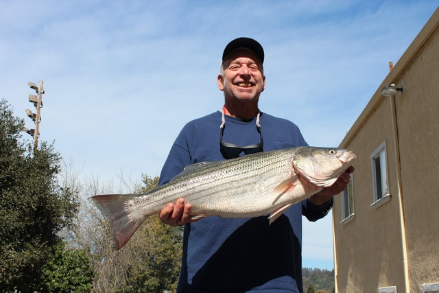 "Ron Martin landed this year's ""Most Exotic Catch,"" a 17.2 lb. striped bass,, while fishing for perch off Manresa Beach with a plastic grub on 10 lb. test line."