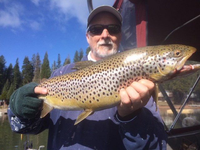 John used a Rapala minnow plug trolled quickly to fool this big Almanor brown on March 27. The fish was successfully release after the photo.