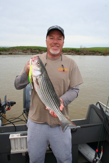 Jim Brittain used a deep running Yo-Zuri to fool this striper while trolling the Delta this spring. With most of the weeds flushed out of the system by big winter rains, Yo-Zuri minnows have been the lure of choice for most anglers targeting spring run bass.