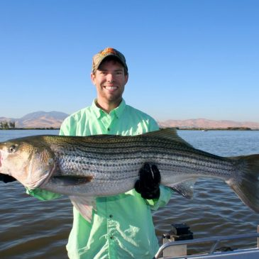 Huge Stripers On Tap In West Delta