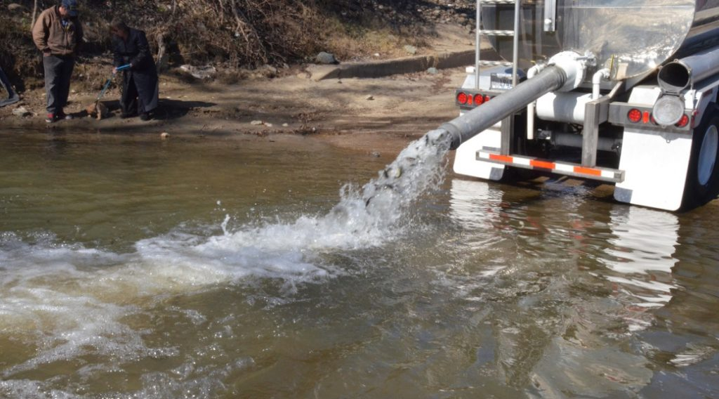 Cdfw is planting 200 000 steelhead in thermalito afterbay for Feather river fishing