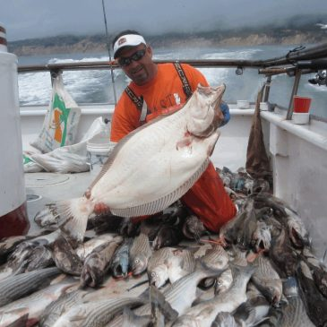 S.F. Bay Halibut Strategy