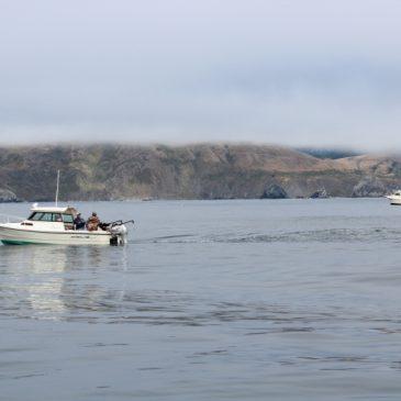 Low Ocean Salmon Abundance Points To Restricted 2016 Season