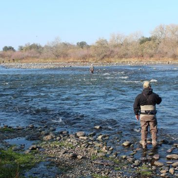 Bureau to increase American River flows to 15,000 cfs