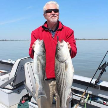 Commission will consider petition to reduce striped bass and black bass populations