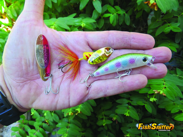 In addition to soaking inflated worms at French Meadows Cal tossed Kastmaster spoons, Vibric Rooster Tails and Yo-Zuri L Minnows. The rainbow pattern L Minnow shown here was the only lure that got hit.
