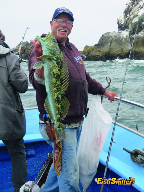 Larry Nelson pulled this quality lingcod off a San Mateo coast rock on July 14 while fishing off the bow of the Happy Hooker.