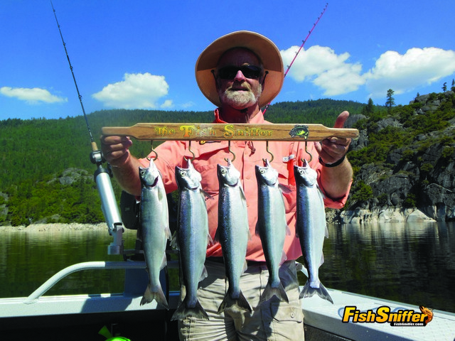 Fish Sniffer Publisher Paul Kneeland shows off a limit of fat kokanee to 15.5 inches he took trolling 22 feet deep at Hell Hole Reservoir.