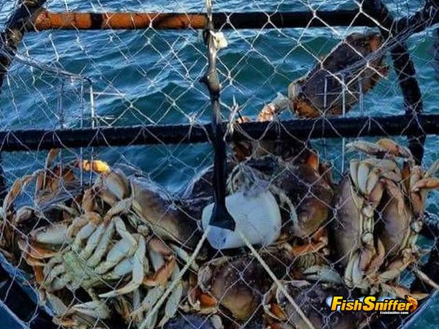 crab pot_web