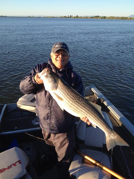 Gene Asai caught and released this 20 lb. striper while tossing out an S Waiver swimbait in the Sacramento Deep Water Channel.