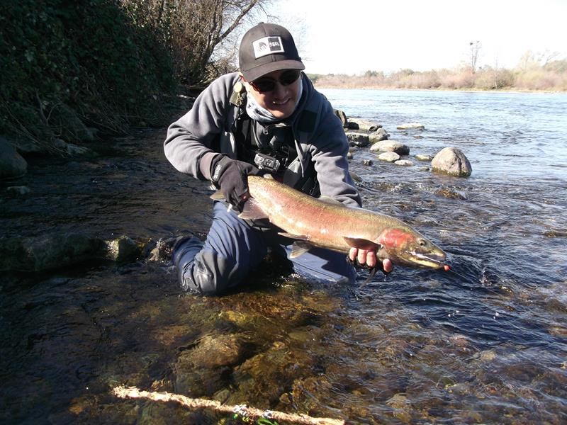 Roland Aspiras caught and released this hard-fighting steelhead on the American River below Nimbus Fish Hatchery in the winter of 2016.