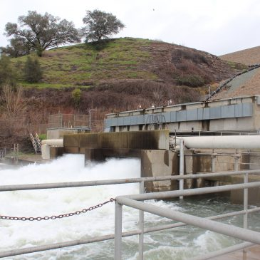 Mokelumne River Hatchery Sees Record Steelhead Run