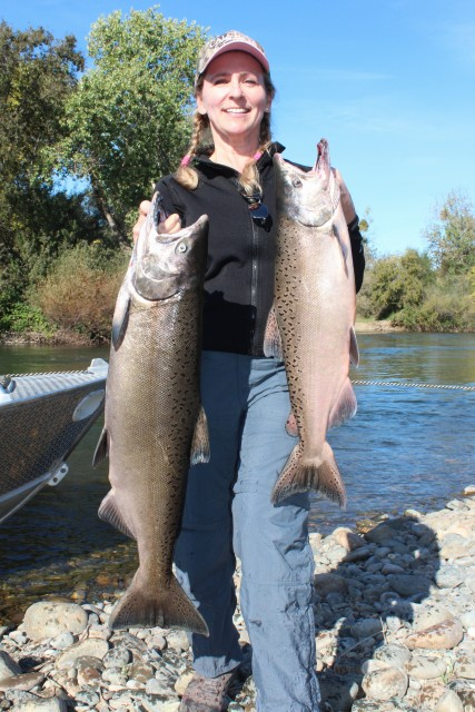 Regina Bosshard holds up a limit of Chinok salmon that she battled during a trip on the Feather River with Robert Weese of Northern California Guide Service on October 6, 2016.
