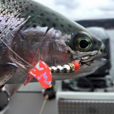 Kokanee Notes For Sockeye Success!