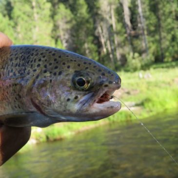 Haunted Canyons, Beautiful Trout…