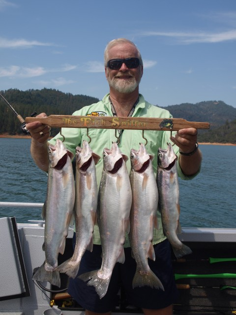 Paul Kneeland with a limit of fat rainbows caught trolling 100 feet deep in the McCloud arm of Lake Shasta.