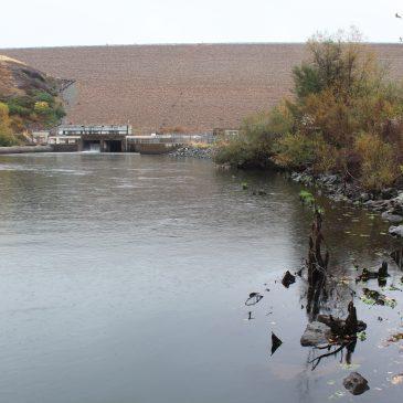 A New Steelhead Run Record Set on Mokelumne River