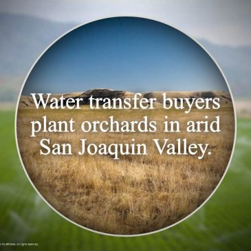Big Court Victory: 10-Year California Water Transfer Program Failed Analysis and Disclosure
