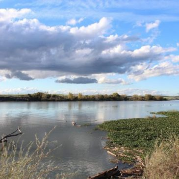 RTD Action Alert: Federal Rider Would Eliminate Litigation Against Delta Tunnels