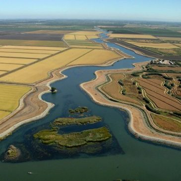FEDERAL ACTION ALERT: Call Your Reps and Demand Due Process for the Delta & No Increased Delta Exports!