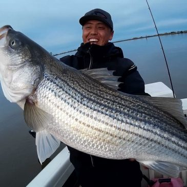 Port of West Sacramento Delivers Stripers, Catfish and Black Bass