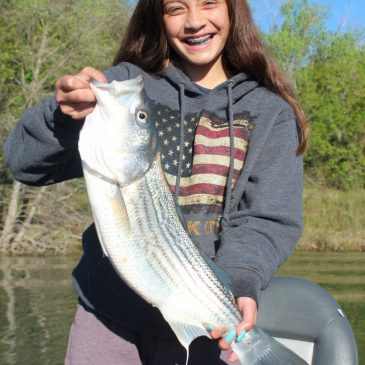 Stripers Still Biting as Anglers Get Ready for Salmon on Feather River