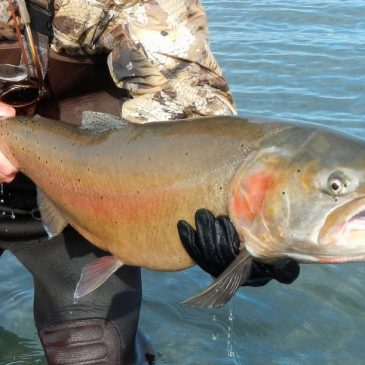 Tahoe: A Lake of Superlatives and State Fish Records