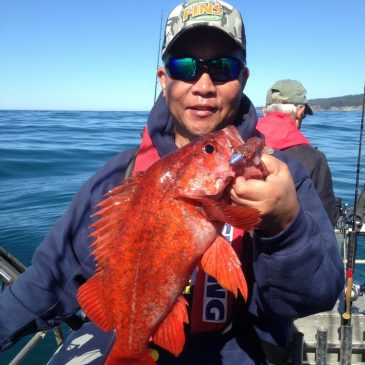 Go Light and Shallow for Sonoma Coast Rockfish