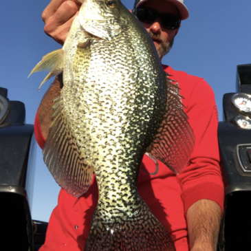 Bass Angler Catches New Lake Record Crappie at New Melones