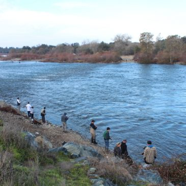 Update: Bureau of Reclamation Slashes American River Flows at a Critical Time for Salmon