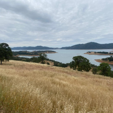 New Melones Reopens with Great Kokanee and Bass Fishing.
