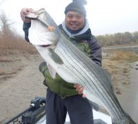 An Introduction to Plugging for Stripers